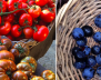 Local's Guide to Farmers Markets in Byron Bay