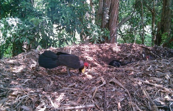 Byron-Bay-Adventure-Tours-Dolphins-Bush-Turkeys