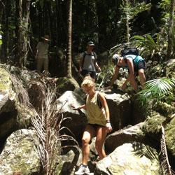 Byron Tours Mount Warning Day Walk