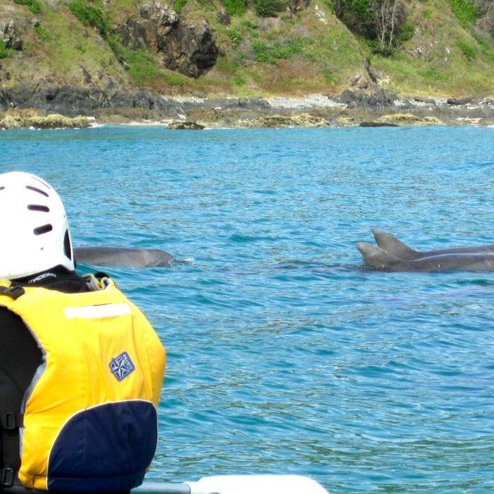 Dolphin_Kayak_Tour_1 - Copy