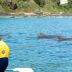 Dolphins-ByronBay