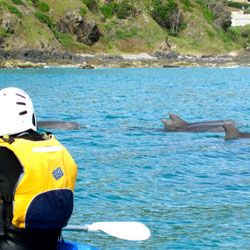 Dolphins Wategos