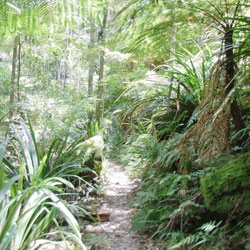 Mount Warning Hinterland Tour