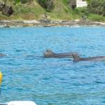 Dolphin_Kayak_Tour_1