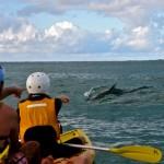 Dolphin_Kayak_Tour_2