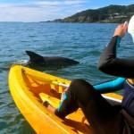 Dolphin_Kayak_Tour_3