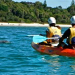 Dolphin_Kayak_Tour_4