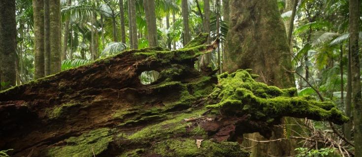 Wilderness Byron Hinterland
