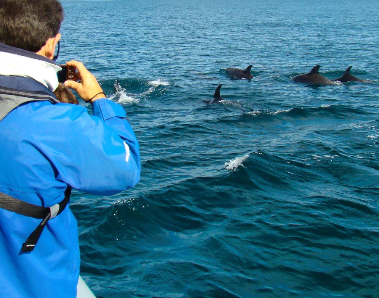 Byron-Marine-Park-Eco-Cruise-11