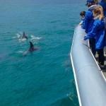 Byron-Marine-Park-Eco-Cruise-3