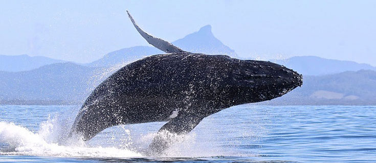 Responsible-Whale-Watching-Byron-Bay-Feature