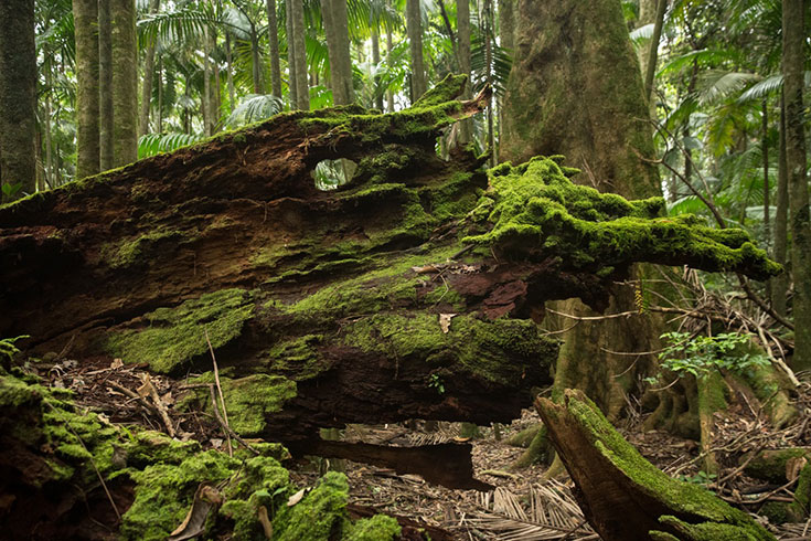 20 Photos that will Make you Want to Visit the Byron Hinterland 14