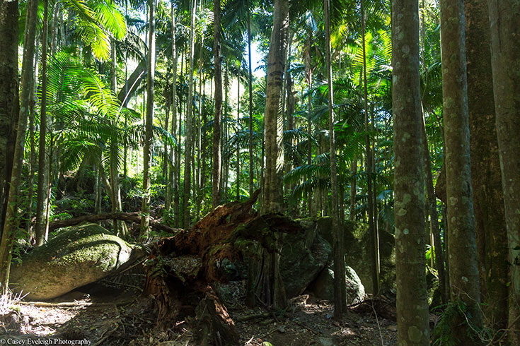 20 Photos that will Make you Want to Visit the Byron Hinterland 19