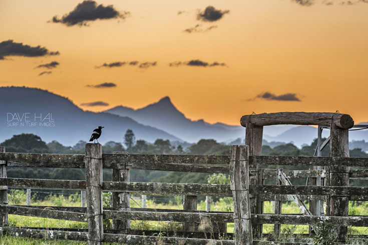 20 Photos that will Make you Want to Visit the Byron Hinterland 4